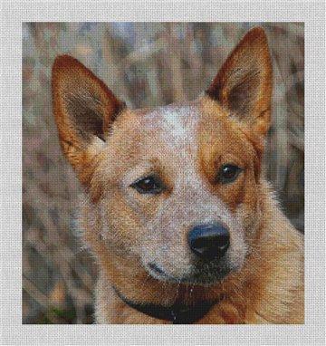 Australian Cattle Dog Needlepoint Canvas