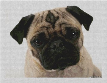 Cute Pug Needlepoint Canvas
