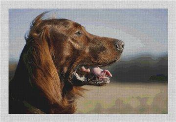 Irish Setter Needlepoint Canvas