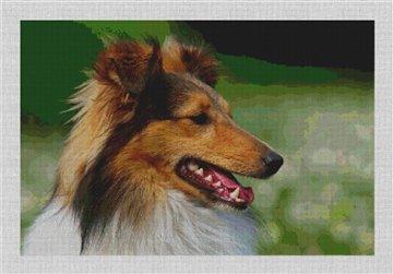 Shetland Sheepdog Needlepoint Canvas